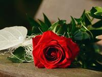 乞巧节鲜花