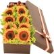 天天美好-8朵向日葵,搭配叶上金送长辈鲜花