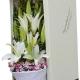 冰清玉洁-11枝香水白百合,搭配石竹梅、间插情人草